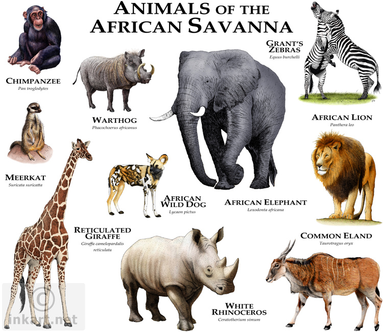 what are some endangered species in the savanna